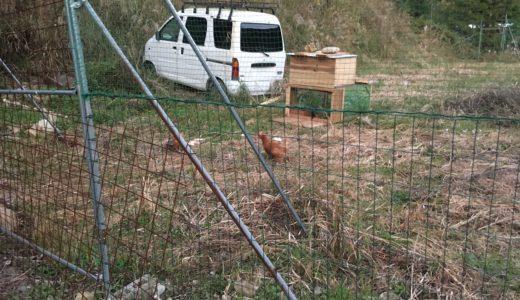 完全無敗!DIYでできる格安で完璧な獣害対策・畑の柵作りの方法【シカ・イノシシ編】その2